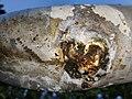 Leak in rusted pipe bottom view.jpg