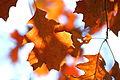 Leaves (3064059527).jpg