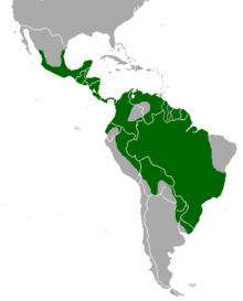 Locelotto o ocelot o ozelot Leopardus pardalis Linnaeus 1758 noto anche come gattopardo o lupo cerviero per il suo verso simile ad un ululato è un felino selvatico molto comune presente in Sudamerica Centroamerica e MessicoIl suo areale si spinge fino al Texas a nord e allisola caraibica di Trinidad a estA nord del Messico locelot si incontra regolarmente solo nellestremità