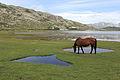Les chevaux du lac de Nino.JPG