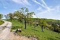Liebenau - 2019-04-24 - NSG Ostheimer Hute (10).jpg