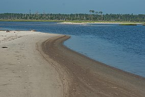 Life on a Tidal Mud Flat (19700633720).jpg