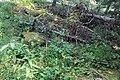 Little Yoho Valley IMG 4821.JPG