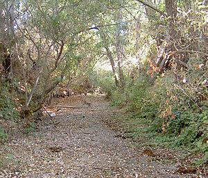 Lynch Creek - Lynch Creek during dry season