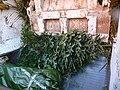 Müllabfuhr Vernichtung von Weihnachtsbäumen.JPG