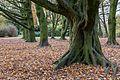 Münster, Park Sentmaring -- 2014 -- 3966.jpg