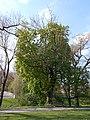 MH-ND10-Kastanie Kluse Park.jpg