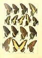 Macrolepidoptera15seit 0025.jpg