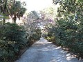 Magnolia Plantation and Gardens - Charleston, South Carolina (8555407073).jpg