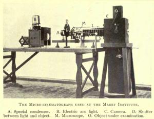 Time-lapse microscopy - Image: Marey's micro cinematograph