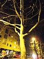 Maribor - At Night (8640466135).jpg