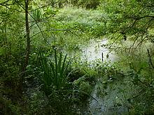 https://upload.wikimedia.org/wikipedia/commons/thumb/d/d7/Marsh_in_Olsztyn.JPG/220px-Marsh_in_Olsztyn.JPG