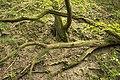 Mežs - panoramio (10).jpg