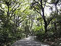 Meiji Shrine - DSC05048.JPG