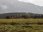 Mendenhall Wetlands Fall 38.jpg