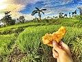 Menikmati makanan khas indonesia.jpg