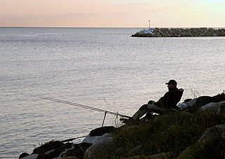 Recreational fishing fishing for pleasure or competition