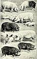 Meyers grosses Konversations-Lexikon - ein Nachschlagewerk des allgemeinen Wissens (1908) (14755690896).jpg