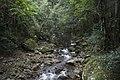 Minnamurra Rainforest - panoramio (6).jpg