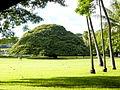 Moanalua park tree.jpg
