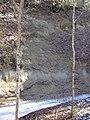 Molasse Charbonnière 29.02.2012.JPG