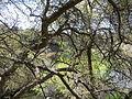 Montezuma Well (13742264904).jpg
