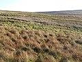 Moorland near the county border - geograph.org.uk - 613249.jpg