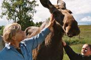 Moose Zoo Östersund