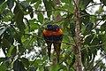 More Australian wildlife.jpg