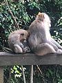 More Monkeys.jpg