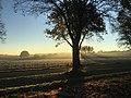 Morgenstimmung im Herbst - panoramio.jpg