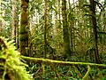 Mossy trees Vancouver Island.jpg
