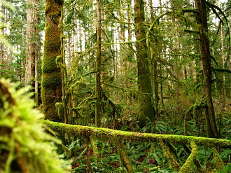 Vancouver Island - The western side of Vancouver Island hosts a rainforest.
