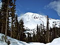 Mount Rainier from Paradise-Longmire Road, Paradise, WA, 8 May, 2009.JPG