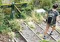 MtTaranaki, Holly hut track.jpg