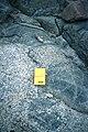 Mt Searle (n shoulder) mafic enclaves in gdt.jpg