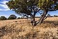 Munds Mountain Trail (38822503622).jpg