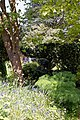 Myddelton House, Enfield, London ~ pathway through trees and shrubs 01.jpg