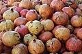 Myrtales - Punica granatum 3.jpg