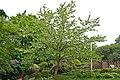 Näsduksträd 3.jpg
