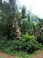 Nairobi Arboretum Park 34.JPG