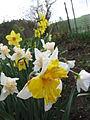 Narcis (14).jpg