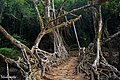 Natural Living Roots Bridge Mawlynnong , Meghalaya.jpg