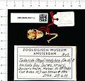 Naturalis Biodiversity Center - ZMA.MAM.28411.a pal - Mops condylurus - skull.jpeg