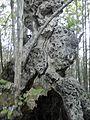 Nature - Natura (14573910389).jpg