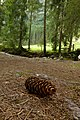 Nature in Austria 2012 (3).jpg