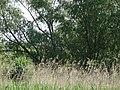 Naturschutzgebiet Heuckenlock 21.05.2014 15.JPG