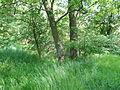 Naturschutzgebiet Heuckenlock 21.05.2014 25.JPG