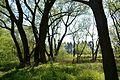Naturschutzgebiet Mittleres Innerstetal mit Kanstein - Innerste bei Wartjenstedt - Uferwald (1).JPG