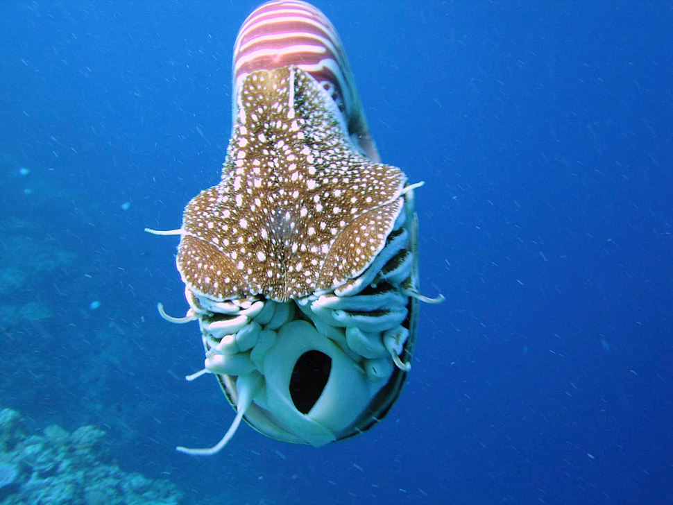 Nautilus front